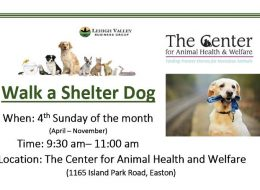 home-walk-a-shelter-dog